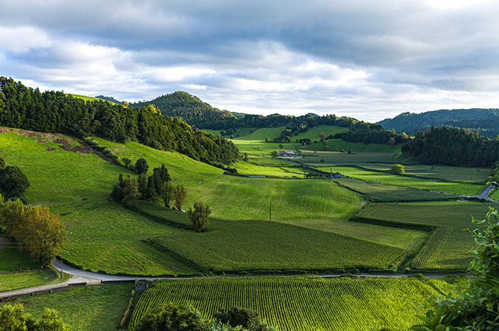 Green fields and rolling grass hills with mountains and trees in background